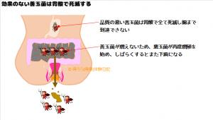 品質の悪い善玉菌は胃酸で死滅してしまう