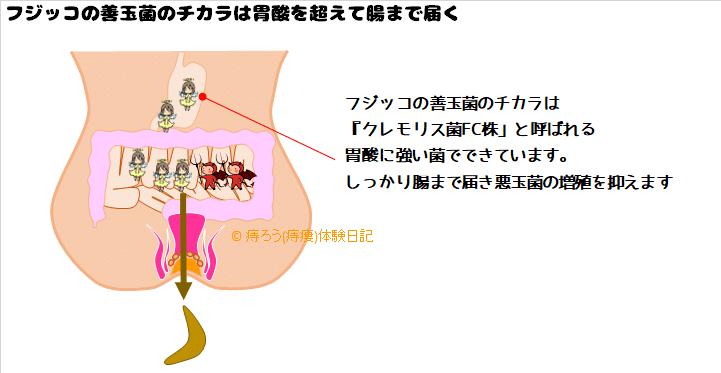 フジッコの善玉菌のチカラは生きて腸まで届きます